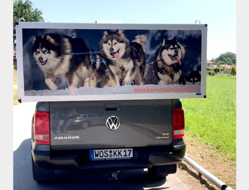 Beschriftung Hundebox Pickup